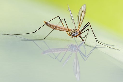 Why Mosquitoes Target Certain People: Reasons And Remedies
